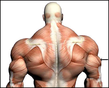 Triceps steroid injection alpha pharma steroids wholesale fabric