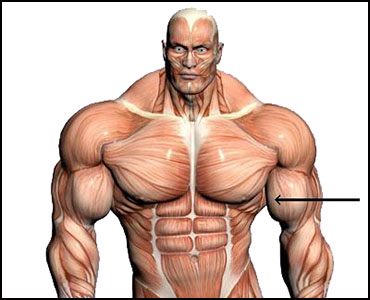 bicep steroid injection