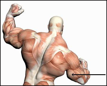 Triceps steroid injection gold dragon scimitar osrs