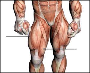 Intramuscular Injections (IM) - Quadriceps